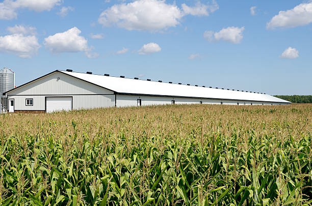 Poultry Barn Next to Corn Field stock photo