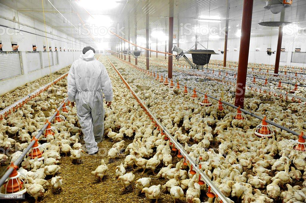 Geflügel Farm und Tierärzte – Foto