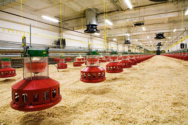 De volaille farm - Photo