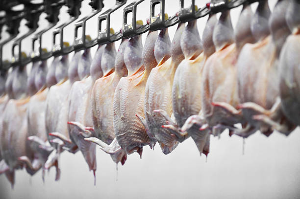 Poultry Meat Processing Food industry detail with poultry meat processing poultry stock pictures, royalty-free photos & images