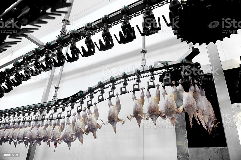 Poultry Meat Processing stock photo