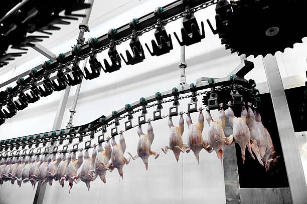 traitement de viande de volaille - poulet viande blanche photos et images de collection