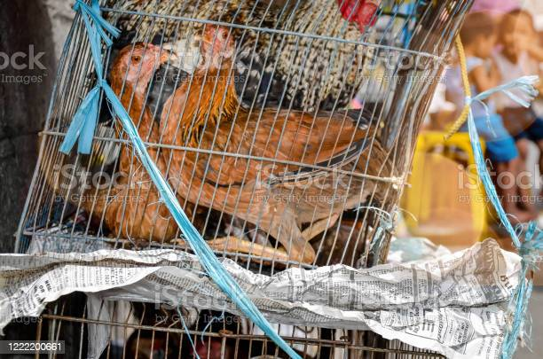 Poultry seller on the streets of manila picture id1222200661?b=1&k=6&m=1222200661&s=612x612&h=wxvkj4g8yk1i5crmddgnepvzbr5 dgerssmtximod2s=