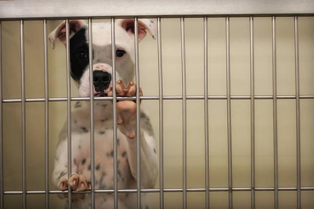Pound Dog stock photo