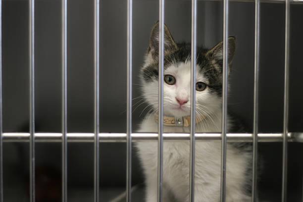 Pound Kitty stock photo