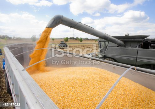 171320236 istock photo Pouring Corn at Harvest Time 465467033