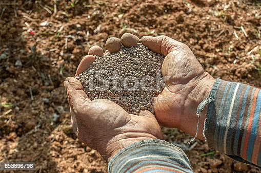 Fertilizer on farmer's hands