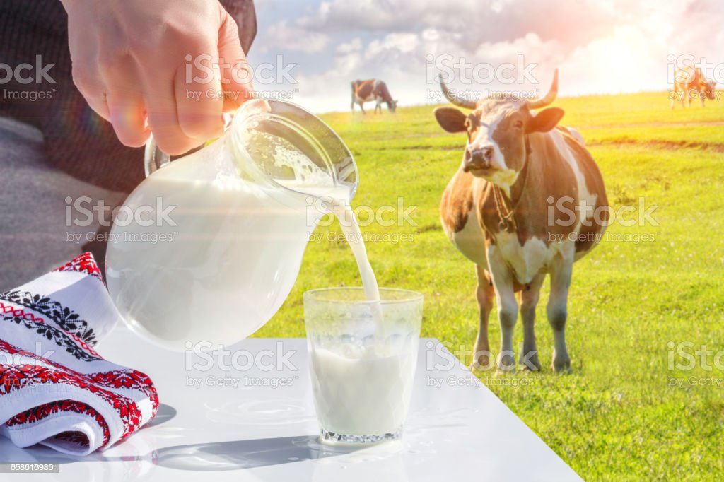 Pouring milk in a glass. stock photo