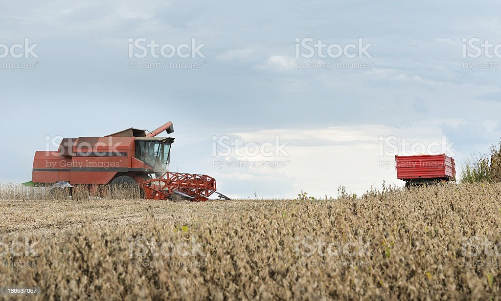 Pouring soy bean royalty-free stock photo