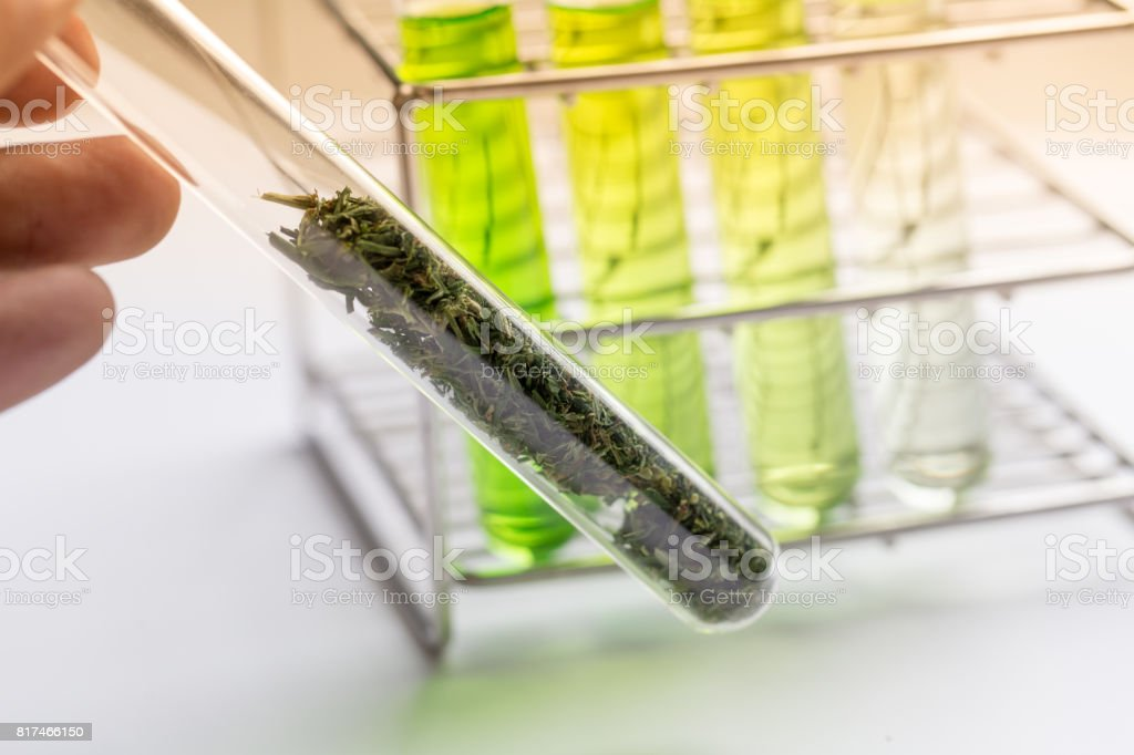 Powder of Cannabis (Drugs), Analysis of Cannabis in laboratory. stock photo