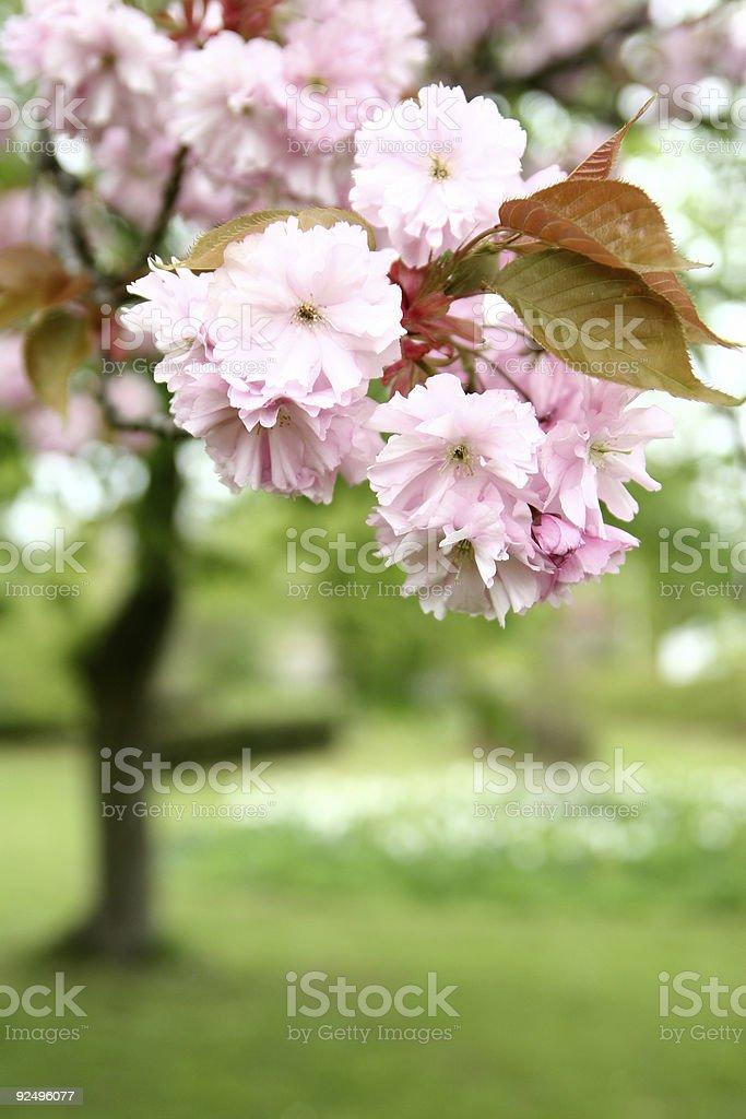 power flower royalty-free stock photo
