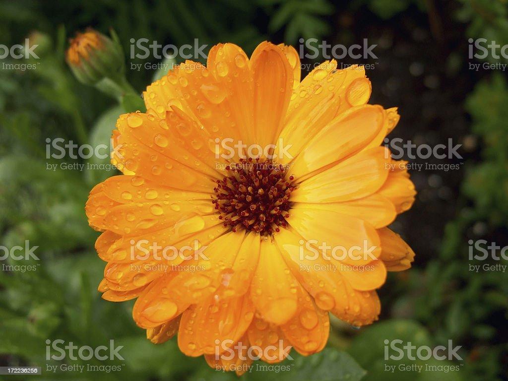 power flower raindrops royalty-free stock photo