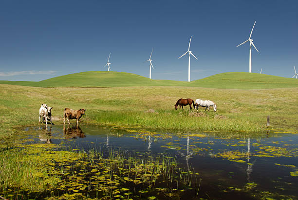 Power generating windmills with livestock stock photo