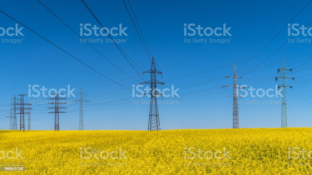 Power line in rapeseed field. Brassica napus. Electrical and renewable energy stock photo