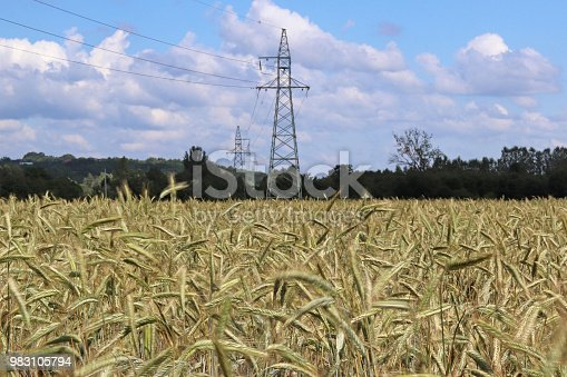 istock Power line on the field of rye and barley. Maturation of the future harvest. Agrarian sector of the agricultural industry. Plant farm. Growing of cereal crops. Source of food and well-being. 983105794