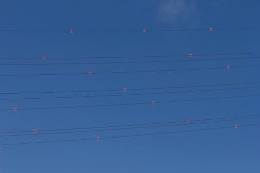 Power Line with Diverter - Tendido Electrico con Salvapajaros