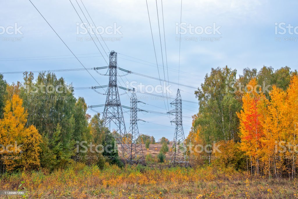 Power lines in autumn forest stock photo