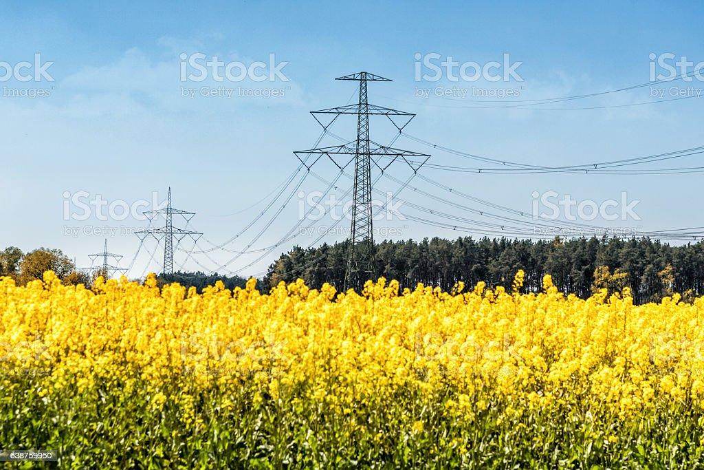 power poles in rape yellow field in Germany stock photo