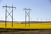 Power supply towers in the middle of a yellow canola field in bloom near Cowley and Pincher Creek, Alberta, Canada.