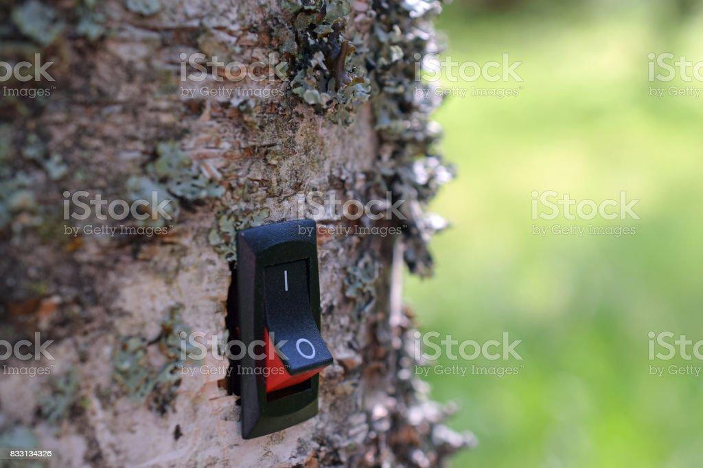 Power switch installed on birch tree. stock photo