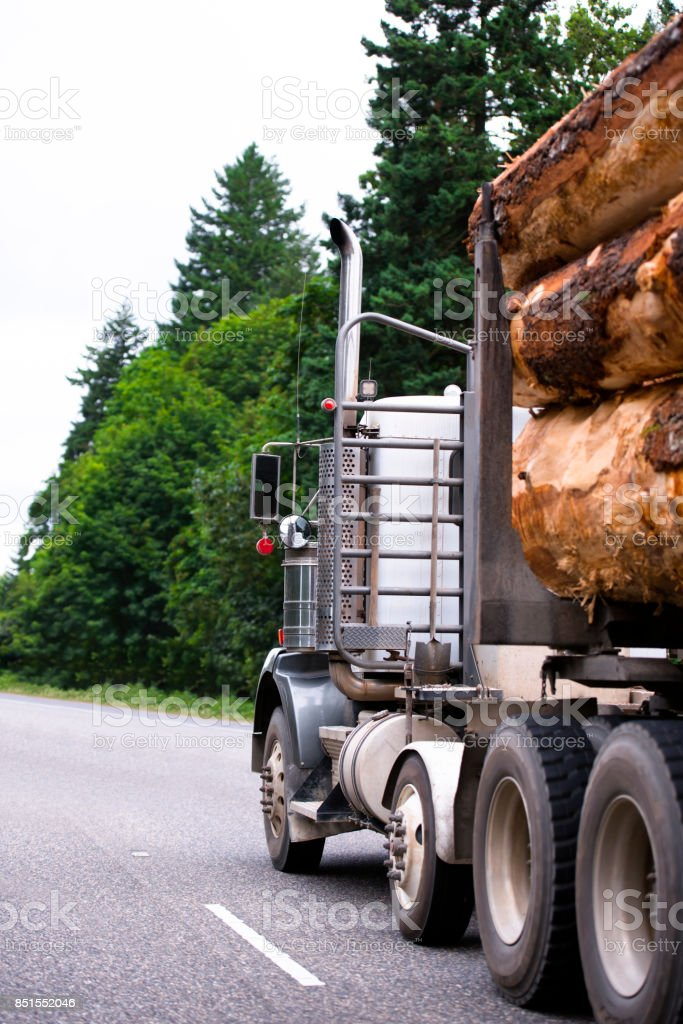 Powerful big rig semi truck carry big logs on the trailer moving by green highway with trees stock photo