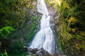 Powerful flowing waterfall with moss and dense green rainforest environment, Tasmania, Australia