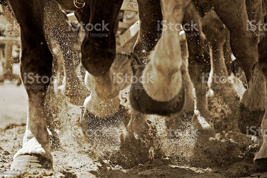Powerful Hooves in Motion (sepia) stock photo