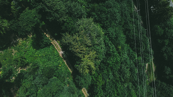Powerline and forest shot from the drone