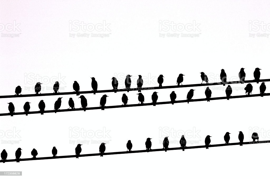 Powerline Birds 1 royalty-free stock photo