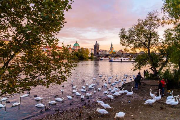 praga por do sol do rio - praga boémia - fotografias e filmes do acervo