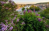 Vltava river in Prague with several bridges across such as Charles's Bridge and Manesuv bridge.