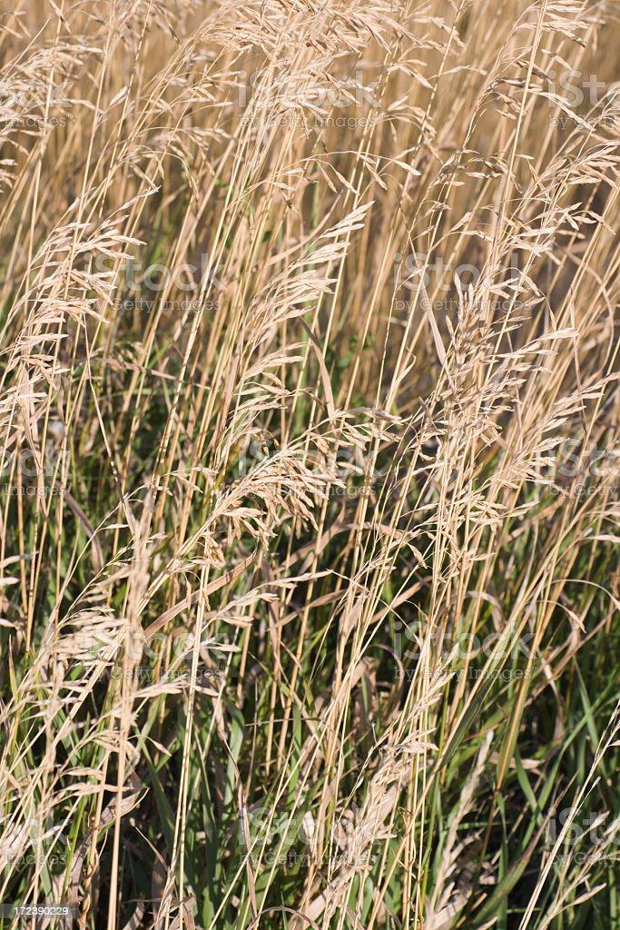Prairie Close-up Vt royalty-free stock photo