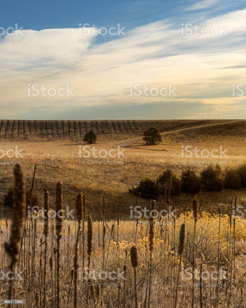 Prairie Colorado stock photo