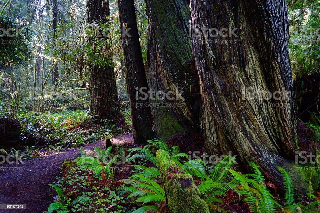 Prairie Creek Redwoods Scene stock photo
