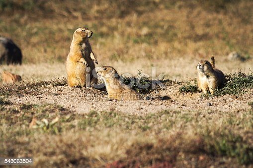 Group of Prairie dogs near a burrow entrance