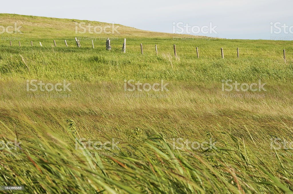 Prairie grass and hills royalty-free stock photo