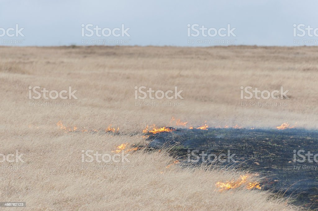 Prairie Grass Fire stock photo