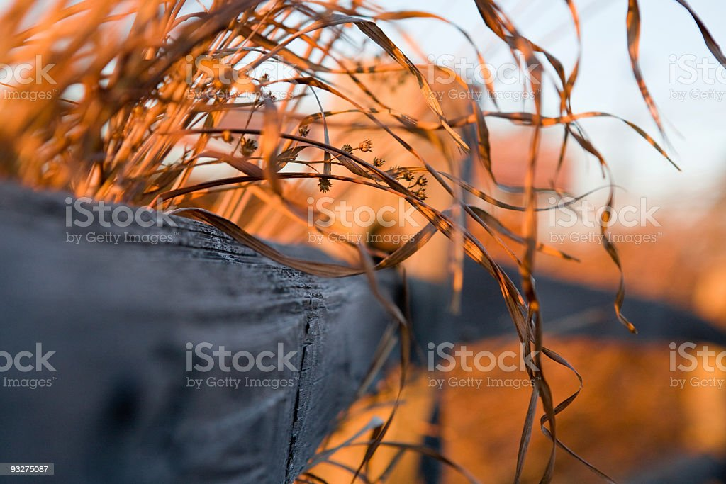 Prairie Grass in Winter stock photo