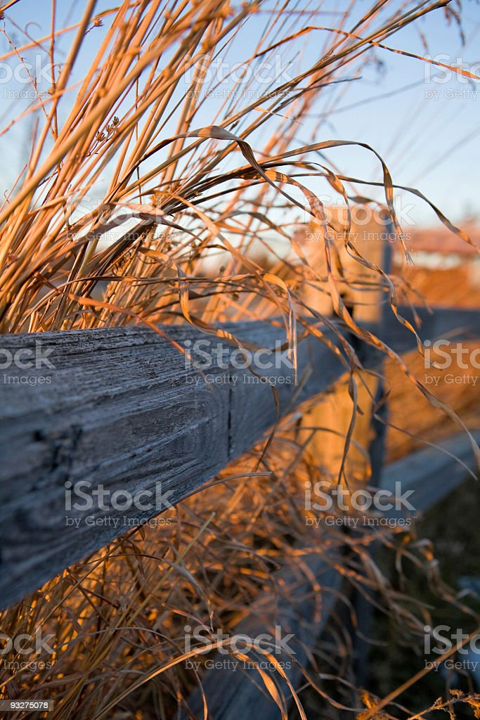 Prairie Grasses in Winter stock photo