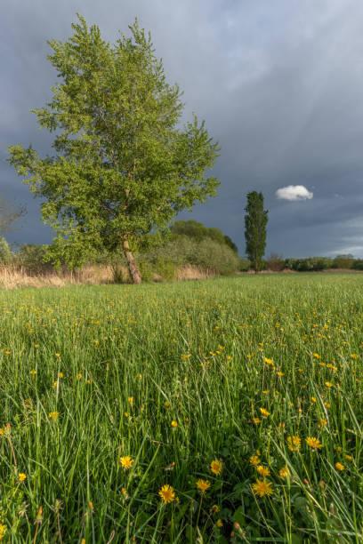 prairie dans la plaine d'alsace - orage en alsace photos et images de collection