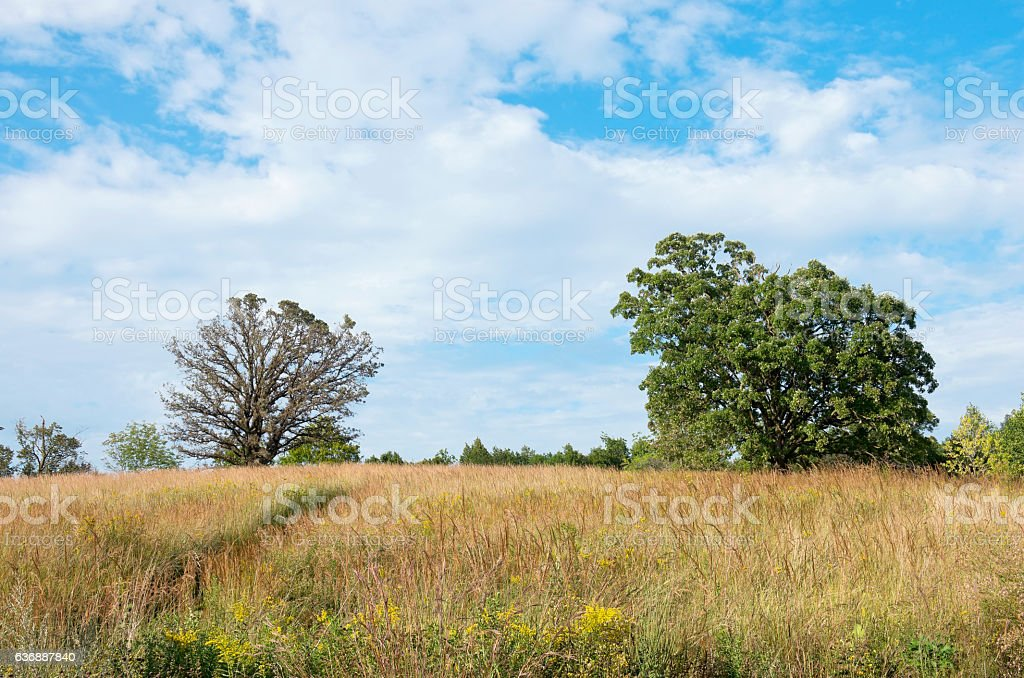 Prairie Landscape and Oak Trees stock photo