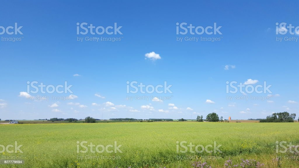 Prairie Landscape With Canola And Old Style Grain Elevator stock photo