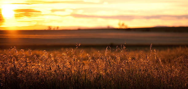prairie panorama at sunset in alberta - great plains stock photos and pictures