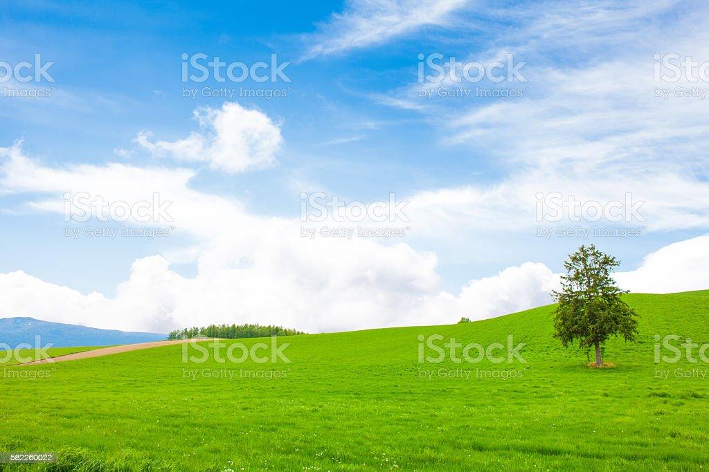 Prairie stock photo