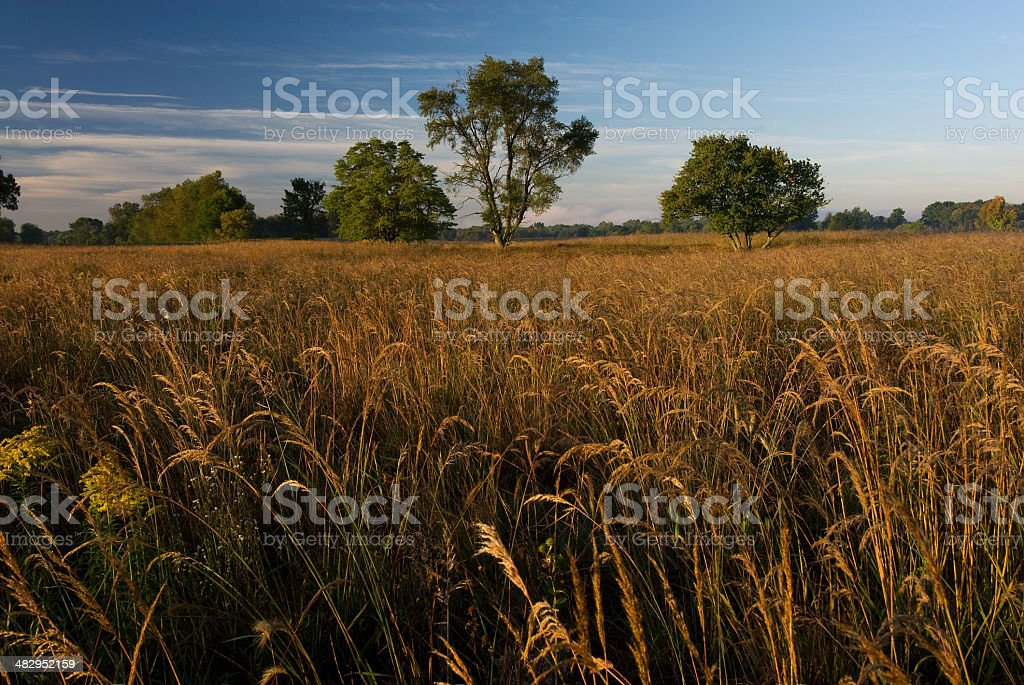 Prairie restoration site stock photo