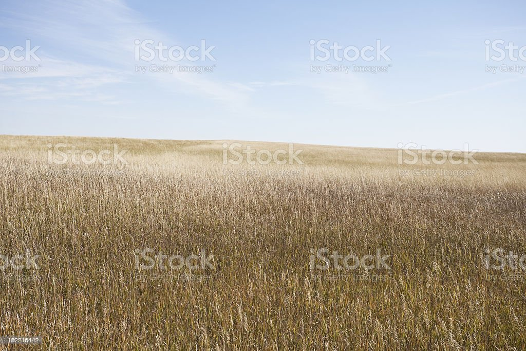 Prairie Series royalty-free stock photo