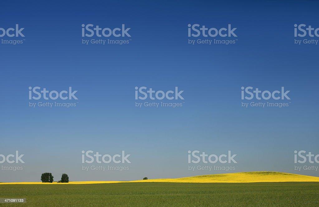 Prairie Sky and Canola royalty-free stock photo