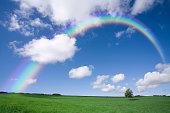 草原の木と虹