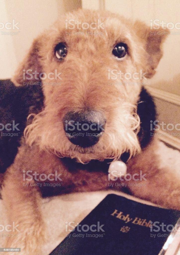 Praise Dog stock photo