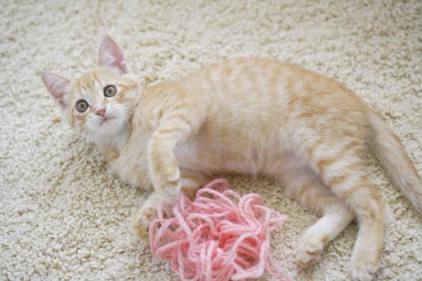 Pranks in wool kitten picture id844661714?b=1&k=6&m=844661714&s=612x612&w=0&h=6e4fsf7od5rexyn eijfbhlfhifsc1hvcykdz8cmqsk=